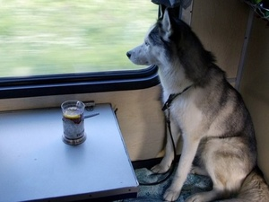 На Горьковской железной дороге услуга перевозки домашних животных без сопровождения теперь доступна в 20 поездах