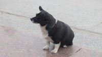 Забирая в добрые руки щенка, нижегородка лишилась 95 тысяч рублей