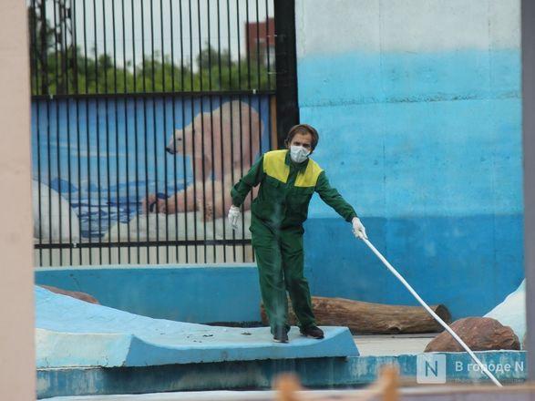 Выжить в пандемию: что происходило в закрытом зоопарке «Лимпопо» - фото 17