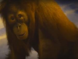 Орангутаны ждут гостей в зоопарке «Лимпопо»