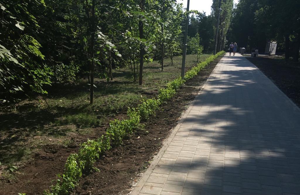Живая изгородь почти в 400 метров появилась в сквере на проспекте Гагарина - фото 1