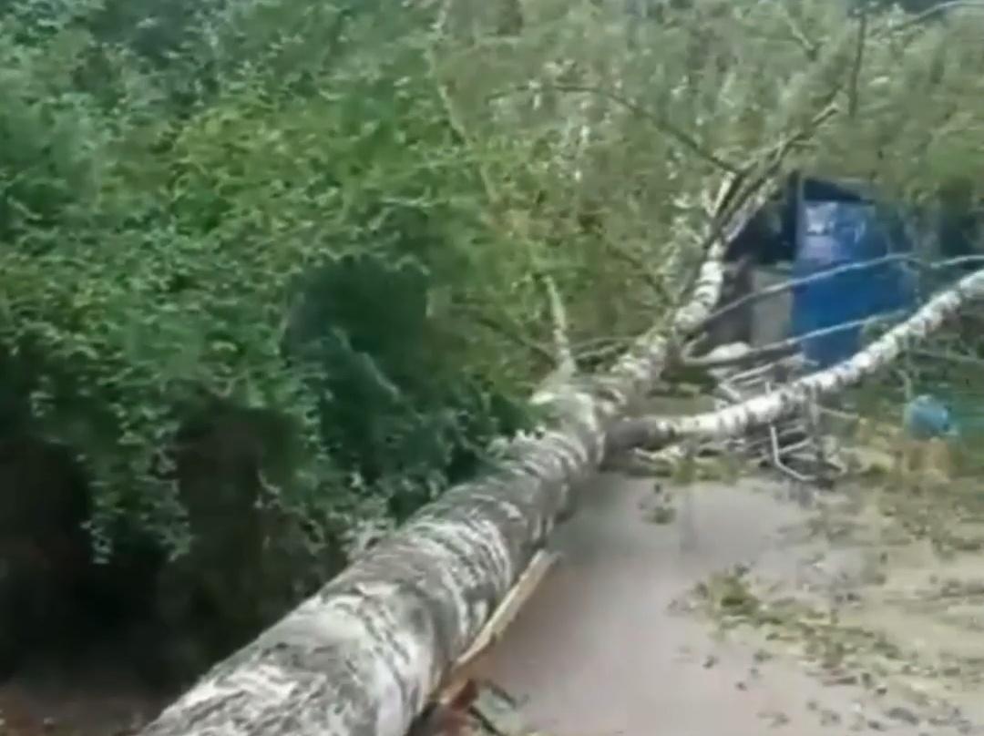 Рухнувшее дерево перекрыло въезд во двор дома в Московском районе - фото 1