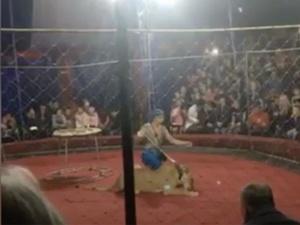 Нападение цирковой львицы на трехлетнюю девочку попало на видео