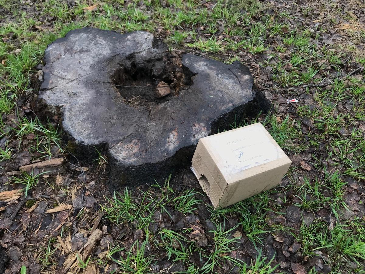 Травить крыс начали в парке Пушкина - фото 1