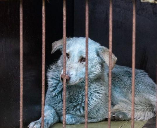 Семерых синих собак из Дзержинска доставили в госпиталь - фото 1