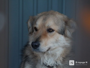 Арзамасские живодеры подвесили собаку над землей и избили трубой