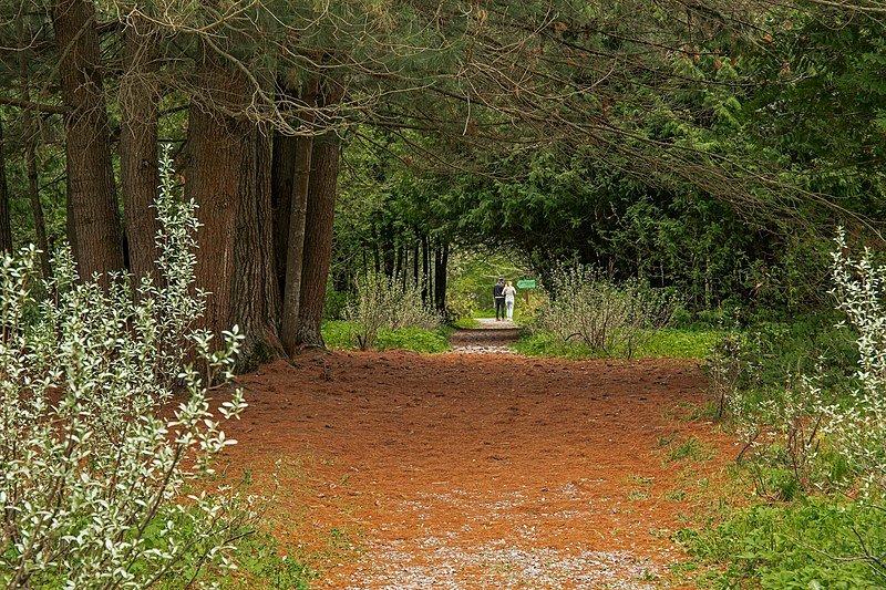 Дзержинский дендропарк стал памятником природы - фото 1