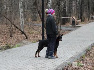 Уникальная площадка и тропинки для собак появились в нижегородском парке «Дубки»