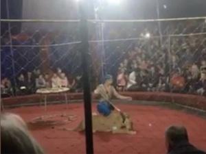 Пережившая нападение цирковой львицы девочка вышла из комы
