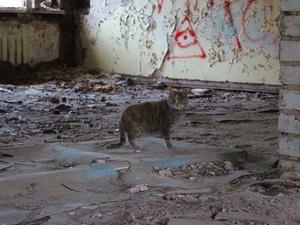Снести или восстановить: что ждет заброшенные здания Ленинского района