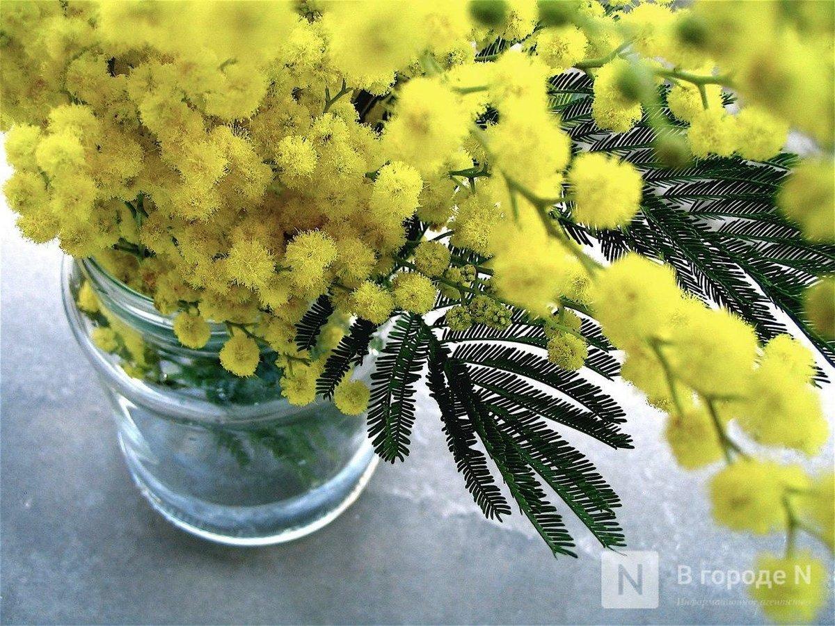 Женская неделя в Нижнем Новгороде: где и как будут праздновать 8 марта - фото 1