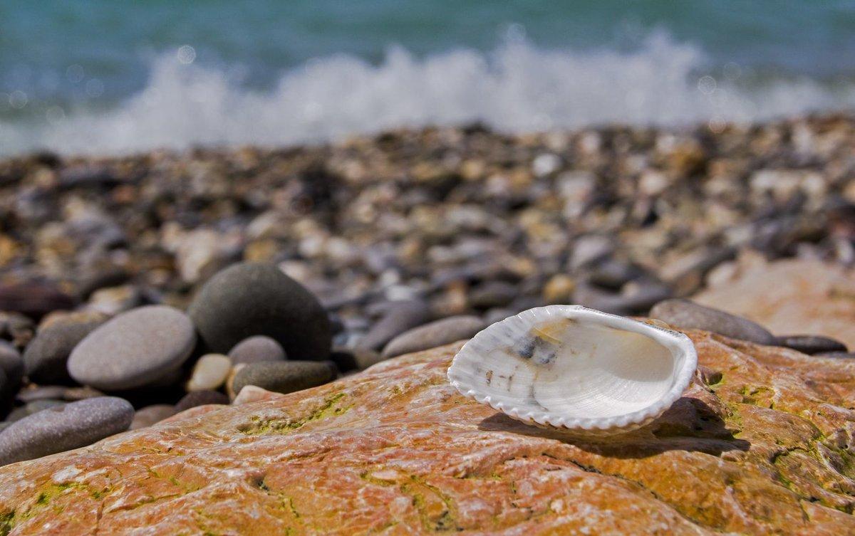 На каких курортах Черноморского побережья можно дешево отдохнуть этим летом - фото 1