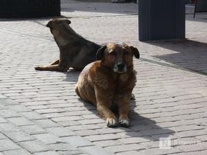 Первый государственный портал о бездомных животных заработает в Нижегородской области