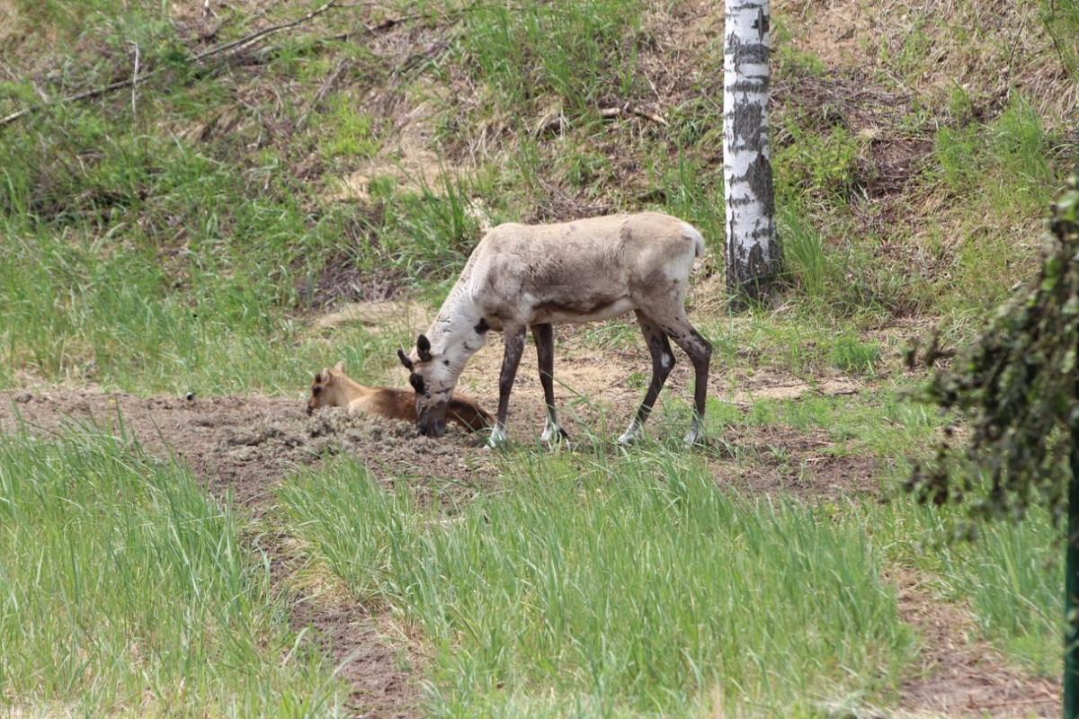 Численность диких животных увеличилась в Нижегородской области - фото 1