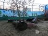 Одноглазая медведица Даша, переехавшая из «Мишутки» в «Лимпопо», умерла