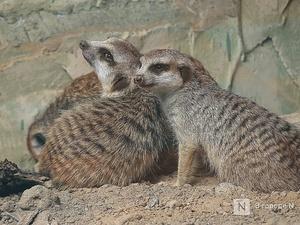 Выжить в пандемию: что происходило в нижегородском зоопарке во время самоизоляции