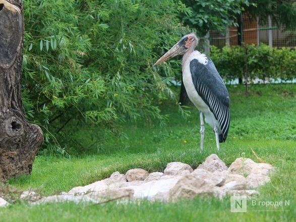 Уникальный вольер для марабу построили в нижегородском зоопарке - фото 12
