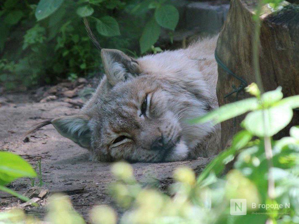 Сотрудники «Мишутки» в парке «Швейцария» будут работать до последнего животного - фото 1