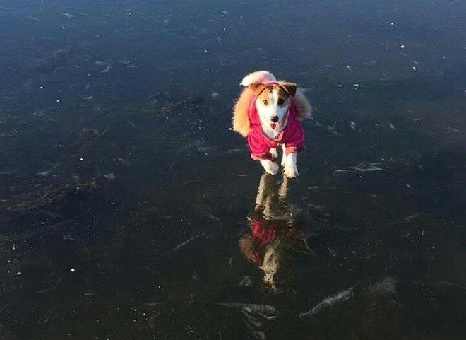 «Я вешу 40 кг, а не 100»: нижегородцы опробовали первый лед на прочность - фото 1