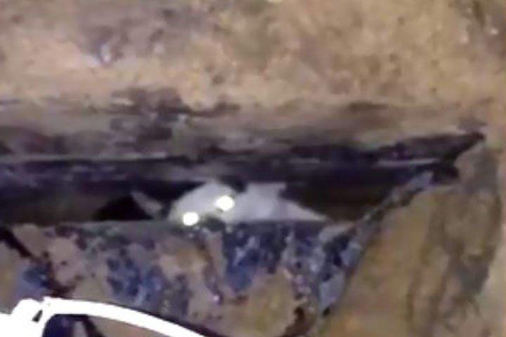 Кот оказался замурован под бетонной плитой в Приокском районе  - фото 1