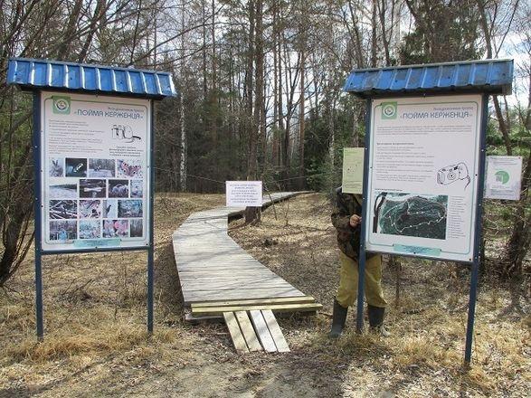 Экотропа в Керженском заповеднике временно закрыта из-за половодья - фото 1