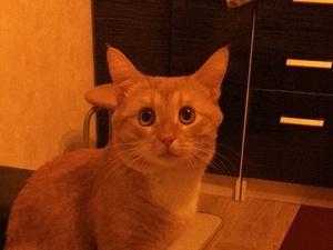 Собчак помешала попасть нижегородскому коту в эфир «Первого канала»