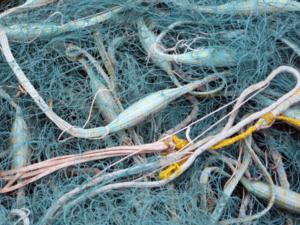 Сокольского рыбака за ловлю плотвы оштрафовали на пять тысяч рублей