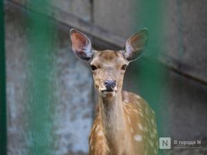 Дирекция «Лимпопо» сделала бесплатным вход для людей, которые помогли зоопарку