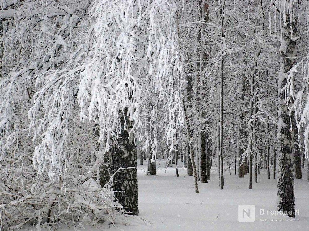 Морозы до -33 градусов надвигаются на Нижегородскую область  - фото 1